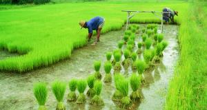 बीमा रकम के लिए परेशान हैं किसान