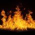 पर्यटन भवन में प्रेमी ने महिला कर्मचारी पर पेट्रोल डाल कर  लगाई आग